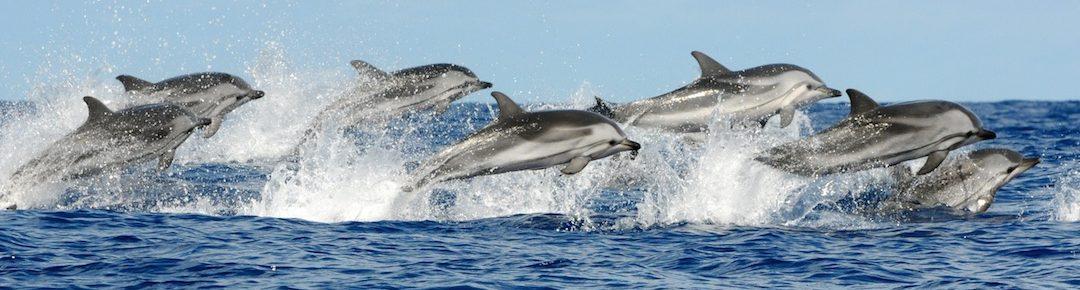 delfiny wyskakują z morza